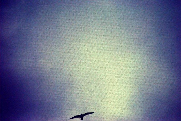 Big Demanding Sky