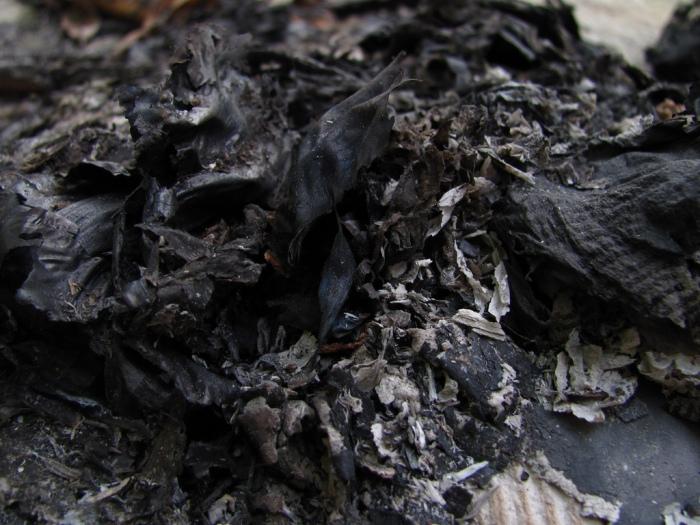 """""""Ashes"""" by Trilok Rangan"""