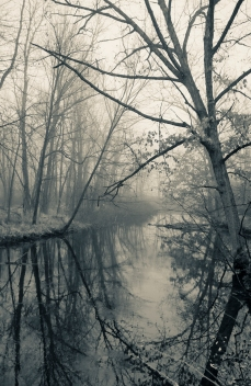 River in Fog