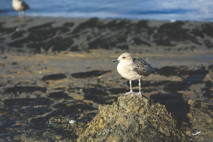 bird-beach-sand-animals-large