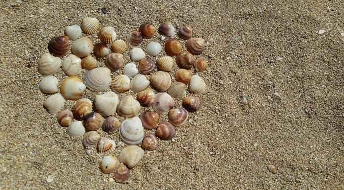 heart-mussels-harmony-love-161002